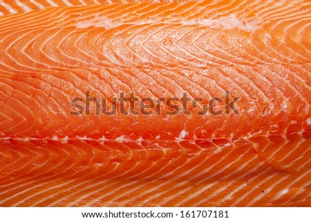 Fresh salmon fillet fish meat