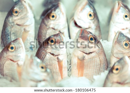 fresh saltwater fishes presented on ice on a market - Izmir, Turkey - stock photo