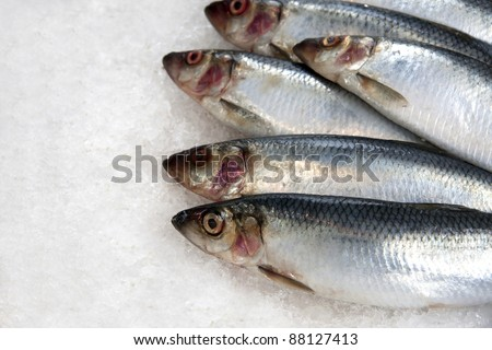 Fresh sardines on ice at a French fish market. Space for your text.