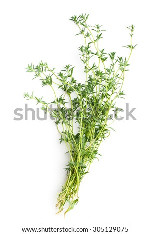 Fresh savory bunch on white background - stock photo
