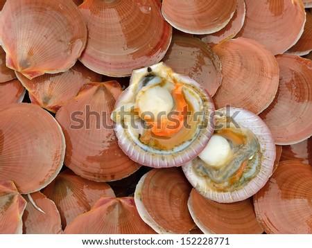 fresh scallops - stock photo