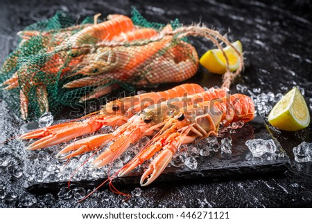 Fresh scampi on ice