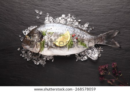 Fresh sea bream or dorade cooling on crushed ice with lemon and herbs waiting to be cooked for a delicious seafood dinner, view from above on slate - stock photo