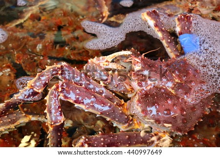 Fresh sea crab in the water, sea crab for sale in the market, surface roughness of crab legs - stock photo