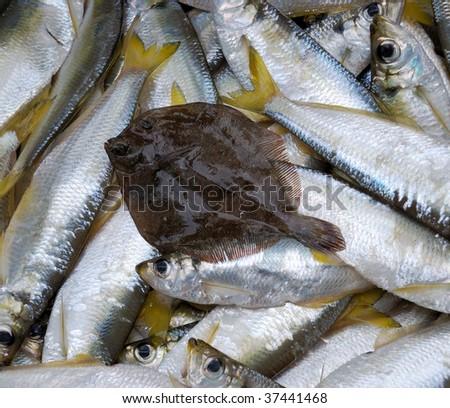 Fresh sea fish as background - stock photo