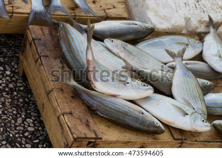 fresh sea fish sold on the streets of the old town