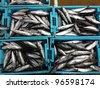 Fresh sea fishes in boxes, Longtail tuna, Thunnus tonggol - stock photo