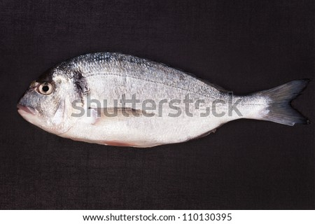 Fresh sea gilt-head bream isolated on dark black background. Luxurious seafood concept. - stock photo