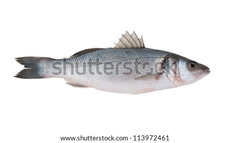 Fresh seabass fish isolated on white background