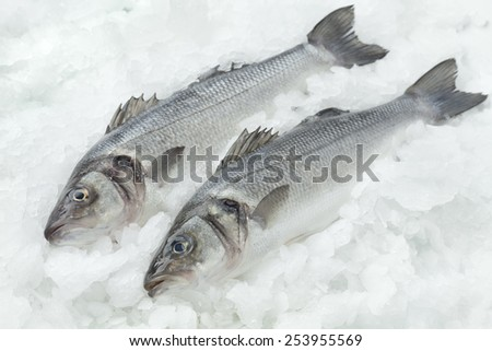 Fresh seabasses on ice - stock photo