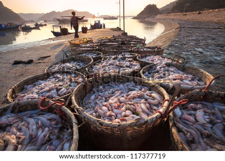 fresh seafood from the fishery harbor in morning,China - stock photo
