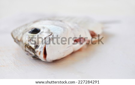 Fresh seawater fish in the kitchen - stock photo