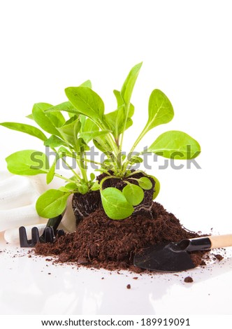 Fresh seedling, young plant isolated on white background. Nature transplant. Garden concept. - stock photo