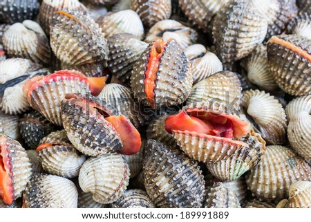 Fresh Shellfish Blood Cockles market edible background.  - stock photo