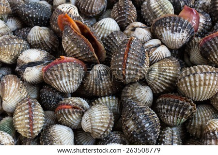 Fresh Shellfish Blood Cockles market edible background.  - stock photo
