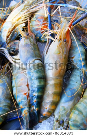 Fresh Shrimp - stock photo