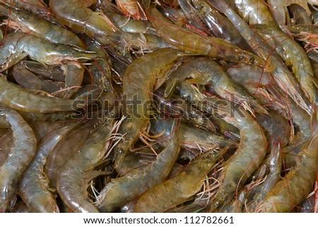 Fresh shrimp in market, Thailand. - stock photo