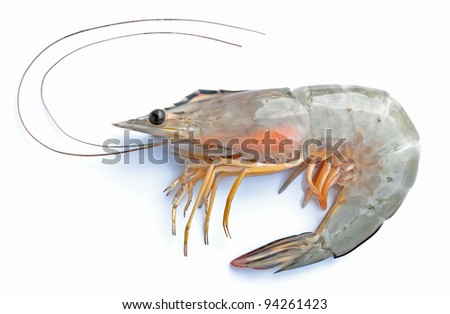 Fresh shrimp in thailand on a white background. - stock photo