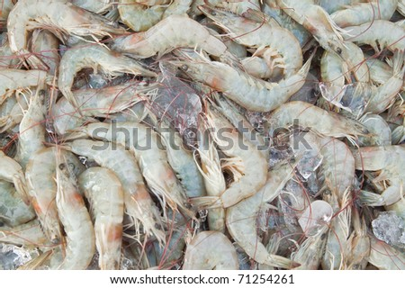 Fresh shrimps at seafood market,East of Thailand