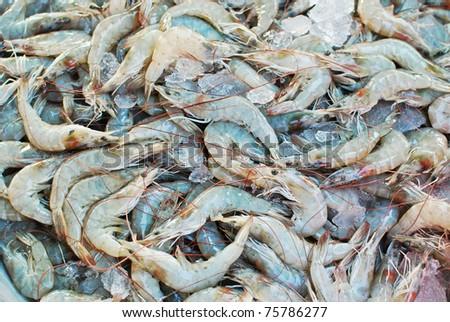 Fresh shrimps on ice tray in fresh market , closeup background - stock photo