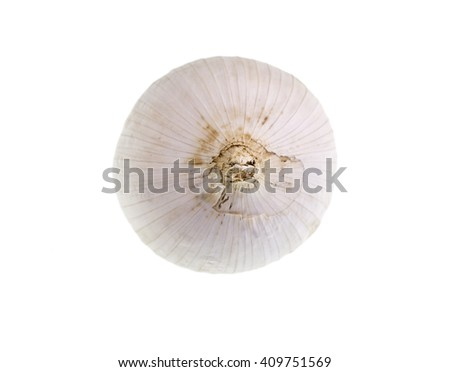 Fresh Single Clove Garlic, also known as pearl garlic or solo garlic, is a variety of Allium ampeloprasum native from southern Europe to western Asia - stock photo