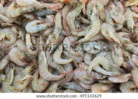 Fresh small prawns in a market place for sales