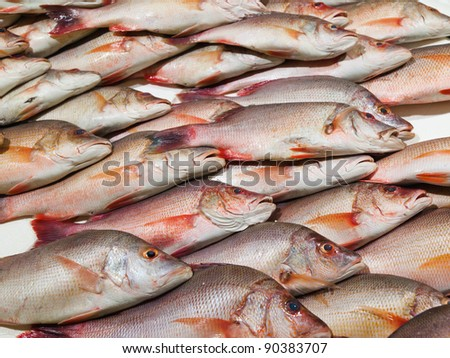 Fresh Snapper fish on display at a London market - stock photo