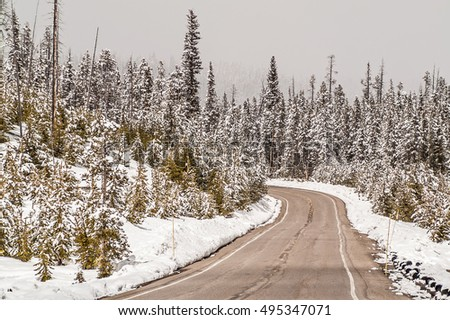 Fresh snow in Yellowstone National Park in May.. The road has been plowed and the scenery is gorgeous.