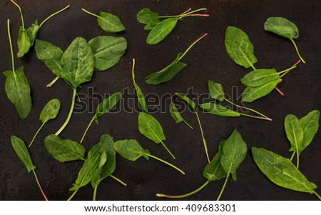fresh sorrel leaves scattered on a dark metallic background. blackout photo - stock photo