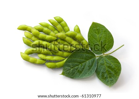 Fresh soy beans in the pods with leaves - stock photo