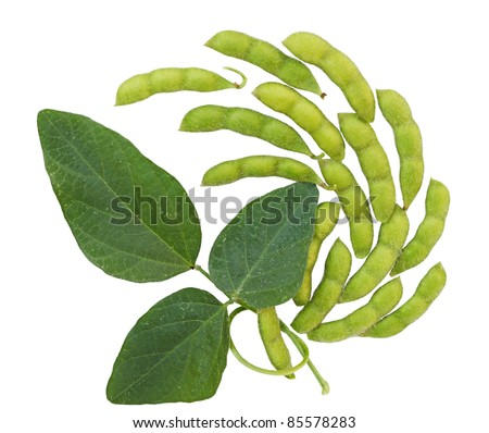 Fresh soybean with pod and leaf
