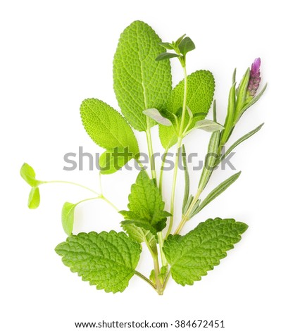 Fresh spices and herbs isolated on white background - stock photo