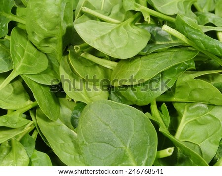 Fresh spinach is a leaf vegetable or leafy green - stock photo