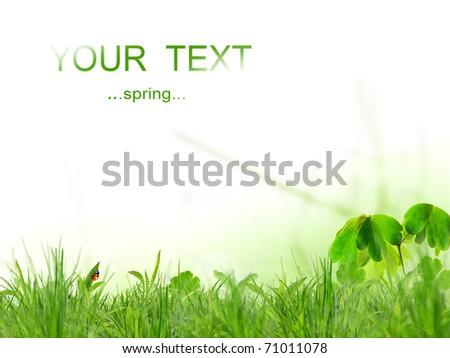 Fresh spring background - stock photo