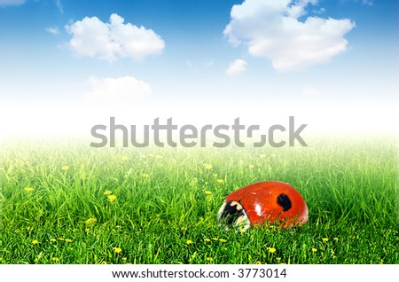 Fresh spring background. Ladybird in grass and blue sky