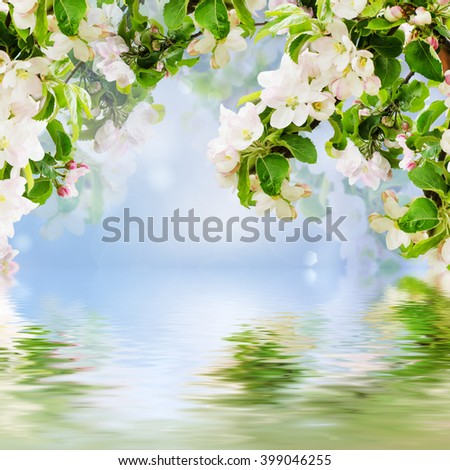 Fresh spring branches of apple tree with flowers and water reflection, natural floral seasonal easter background. Suitable for greeting cards and invintation. - stock photo