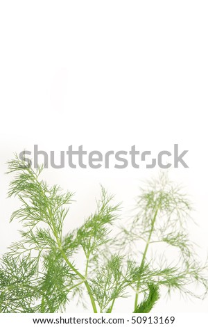 Fresh spring dill background with water drops. - stock photo