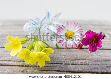 fresh spring flowers on wood with white background - stock photo