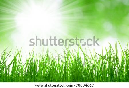 Fresh spring grass - stock photo