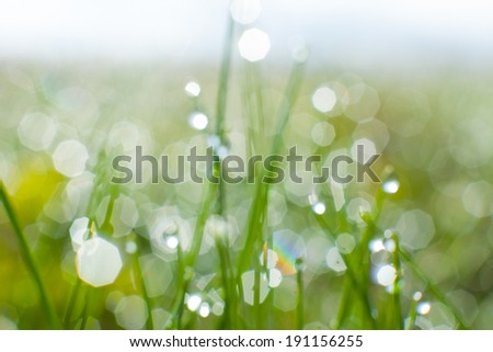 Fresh spring grass background