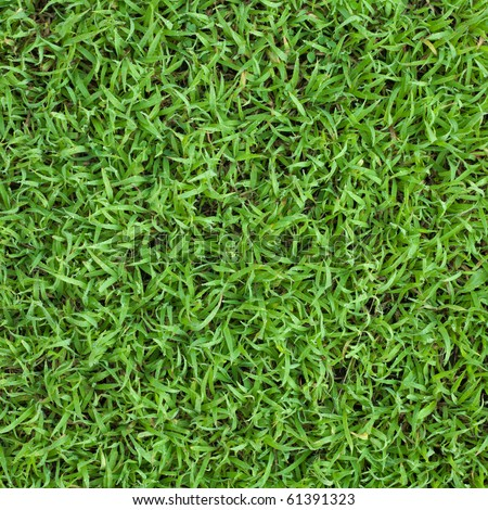 Fresh spring grass top view in the morning, dews on grass can be seen. - stock photo