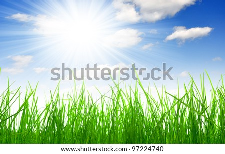 Fresh spring grass with blue sky - stock photo