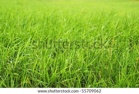 fresh spring green grass - stock photo