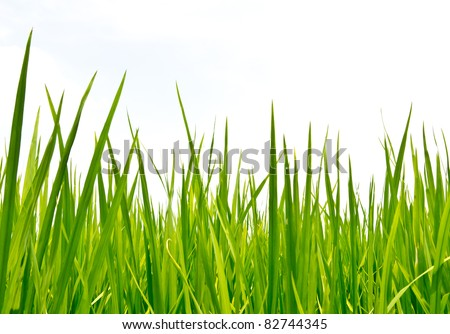 fresh spring green grass - stock photo