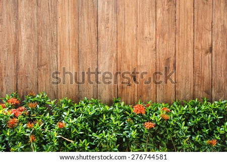 Fresh spring green grass against wood wall background - stock photo