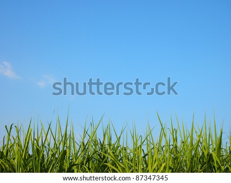 Fresh spring green grass and blue sky - stock photo