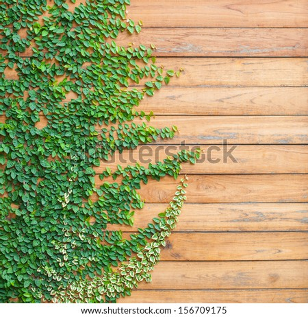 Fresh spring green grass and leaf plant over wood fence background - square format - stock photo
