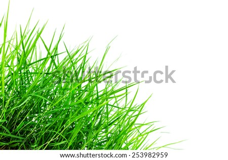 Fresh spring green grass isolated on white background - stock photo