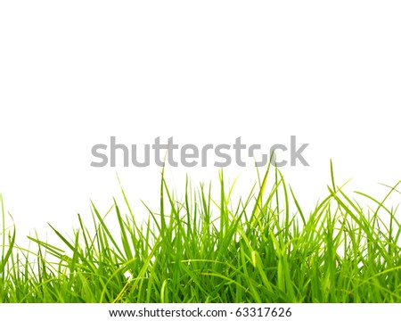 Fresh spring green grass isolated on white background. - stock photo
