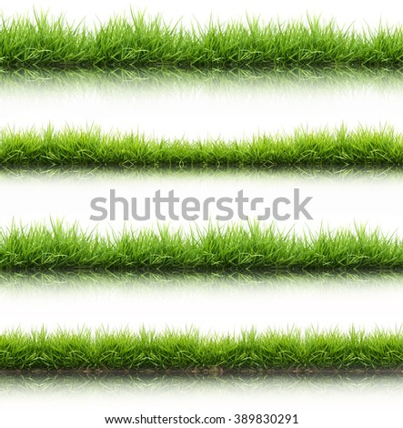 fresh spring green grass isolated on white background with water reflection